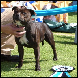 Staffordshire Terrier winner 2009 South Africa