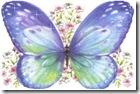 mariposa azul 1