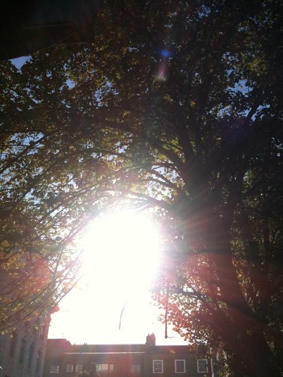 10.10.20 Sun & trees