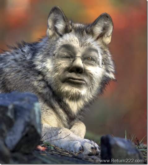 Copia de lobo-wiki