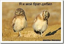 q_i_moj_brat
