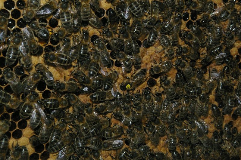 Bee Keeping course at Rigney's Bed and Breakfast Limerick this January