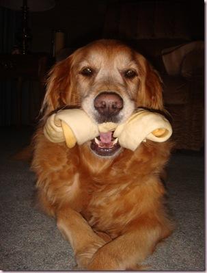 dog pics (23)