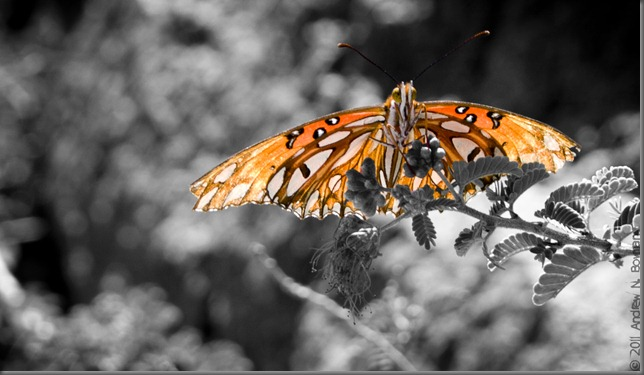 Flutterby grey photoshop
