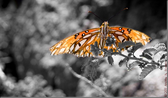 flutterby grey lightroom