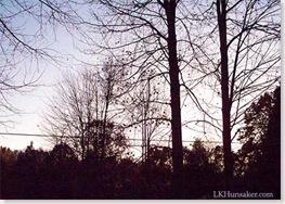fall trees - LK Hunsaker