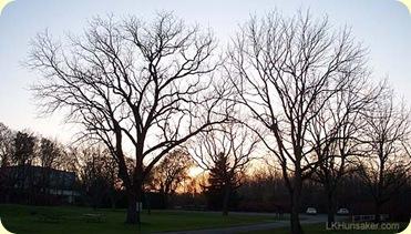 Fall Trees ~ LK Hunsaker 2009