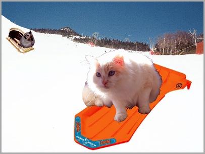 Katie and Alex Sliding on the Ski  Slope