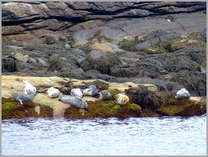 Lazy Seals on Hypocrite Islands