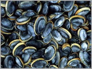Clams Before Steaming