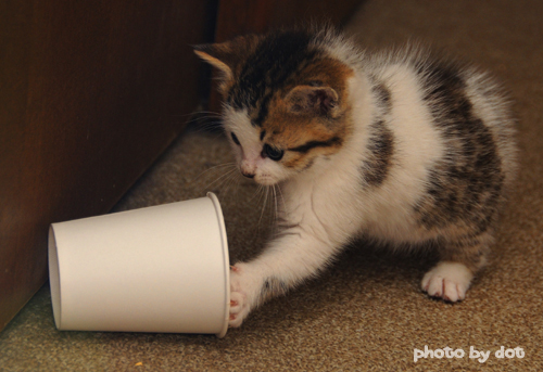 cute kitten playing with a cup