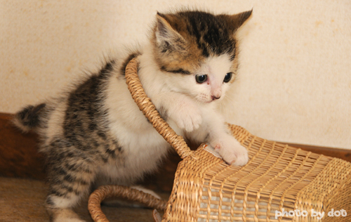 cute kitten playing with basket