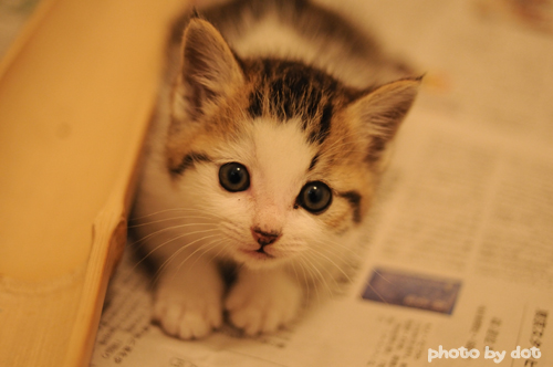 cute kitty cat pic