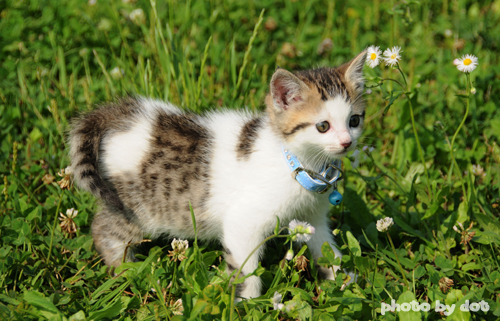 cute kitten out in the garden