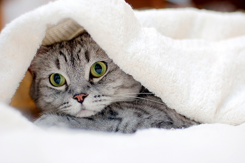 cute cat hiding under cover