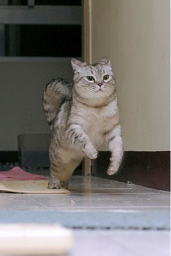 cute cat running