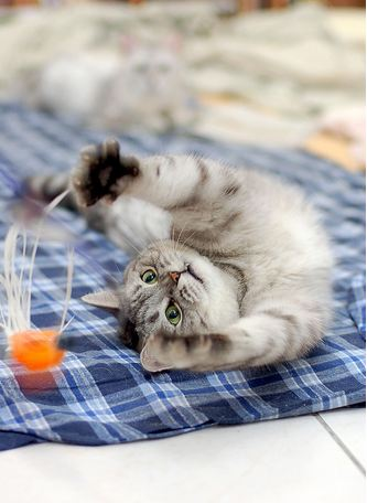 cute cat playing with a toy