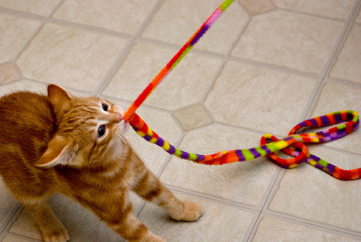 cute ginger kitten pulling a string