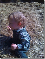 11-6-09 Pumpkin patch