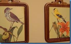 bird pictures 004