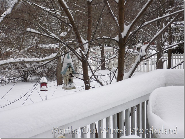 Snow December 20 2009 006
