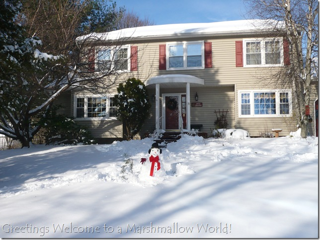 Snow December 20 2009 012