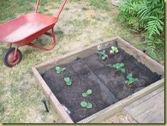 Pumpkins and flower garden 004