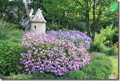 садовые герани
