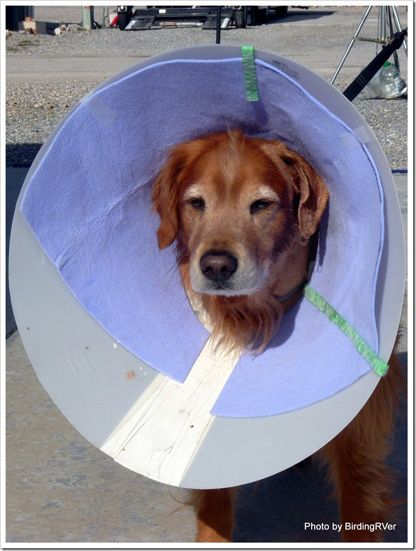 Raider's new and even bigger cone!