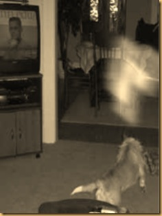 dog-and-ghost-photos