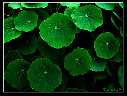 Green © RajivKumar