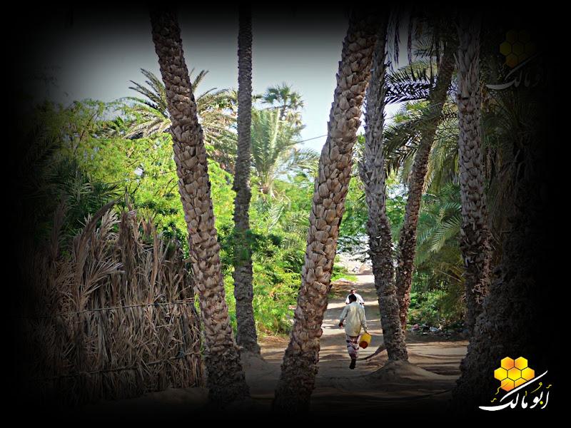 109 سندريلا اليمن بعدسة أبو مالك الخوخه مناظر طبيعية خلابه
