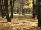Ąžuolynas rudenį