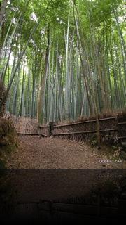 ilgiardinodisejbei, samuraiblog, blogsamurai, bushi, aikido, sejbei, giappone, blog, giapponeblog