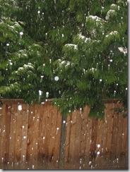 snow 009