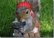 piratesquirrel
