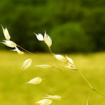 Nature HD 35 - 12.jpg