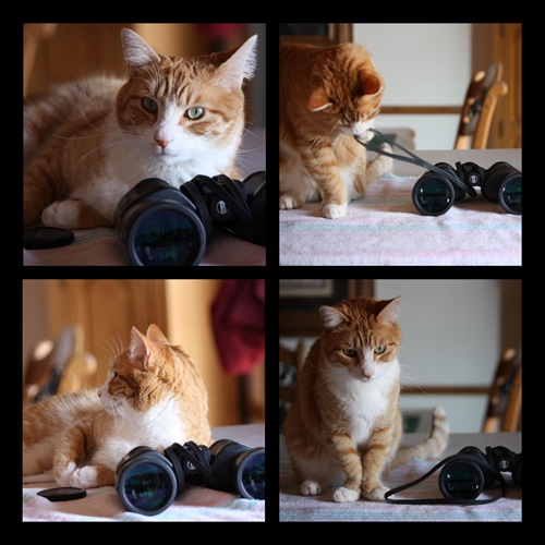 Junior the Birdwatcher collage