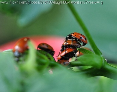 threesome ladybug style