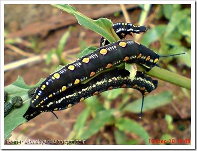 Caterpillars Attack 3