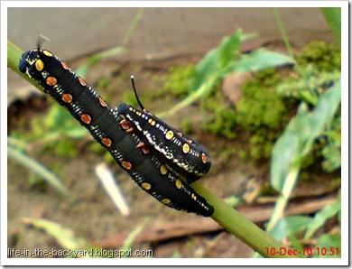 Caterpillars Attack 6