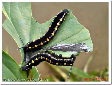 Caterpillars Attack 19
