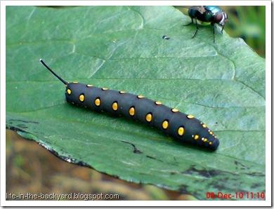 Caterpillars Attack 21