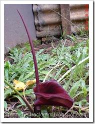bunga ungu bunga liar 10