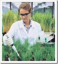 quimica-plantas01