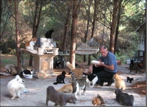 A Terra Prometida para Gatos (7)