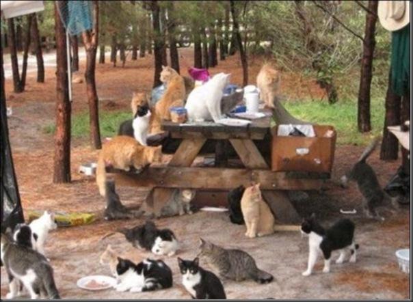 A Terra Prometida para Gatos (6)