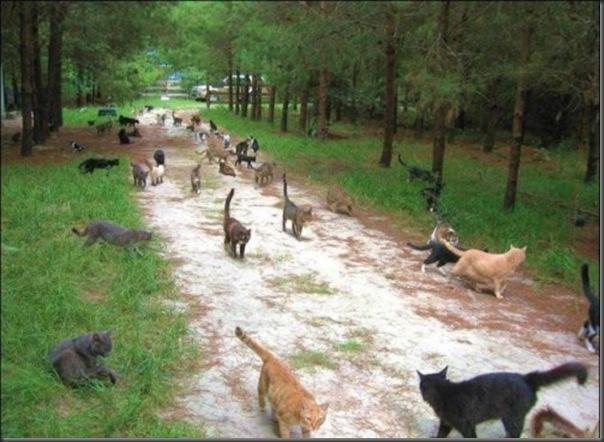 A Terra Prometida para Gatos