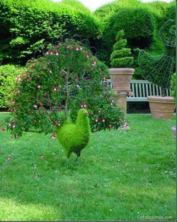 Lindo jardim (21)