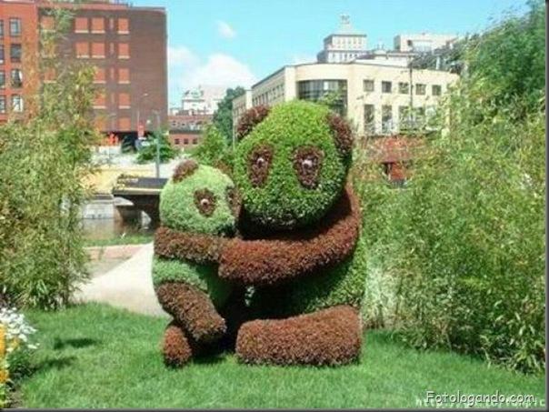 Lindo jardim (10)
